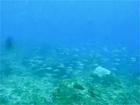 トカラ中之島グンカン2006年11月02日