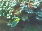 トカラ中之島クマノミアパート2006年11月02日