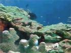 トカラ中之島トーセロ2006年11月03日