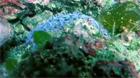神奈川小田原江之浦2007年05月13日