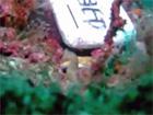 神奈川県三浦城ヶ島2007年11月03日